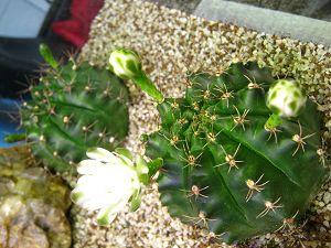 Les plantes à la Résultante