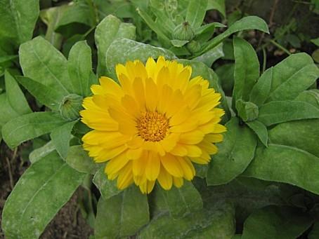 fleurs-6553.JPG
