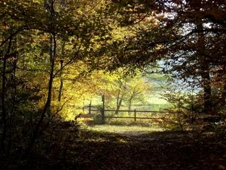 Oh ! Ma forêt ! par Marielle.