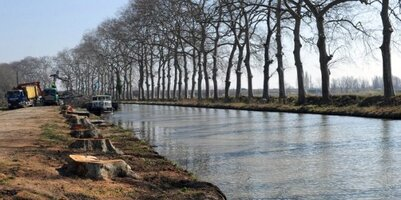 Canal du Midi : 7000 platanes abattus, 1000 arbres replantés