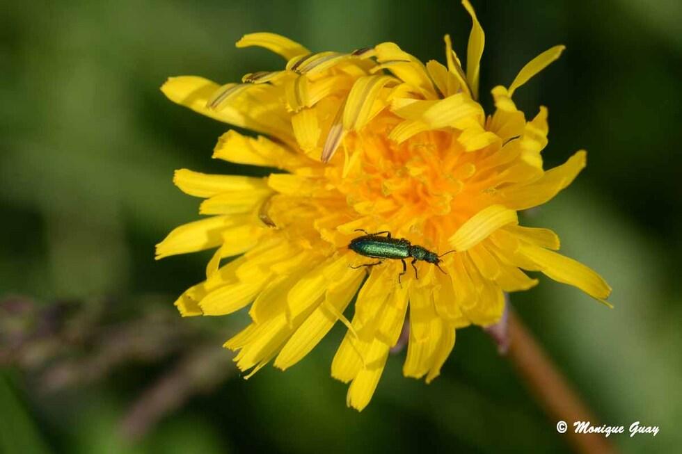 Dimanche fleuri