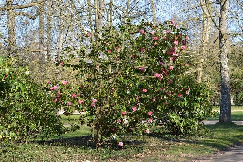 Rambouillet : Dès que le printemps revient (2)