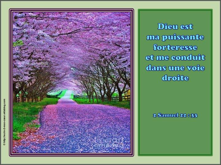 Dieu est ma puissante forteresse - 2 Samuel 22 : 23