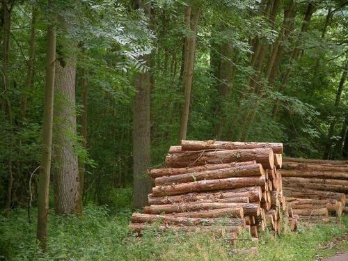 Le silence de la forêt.