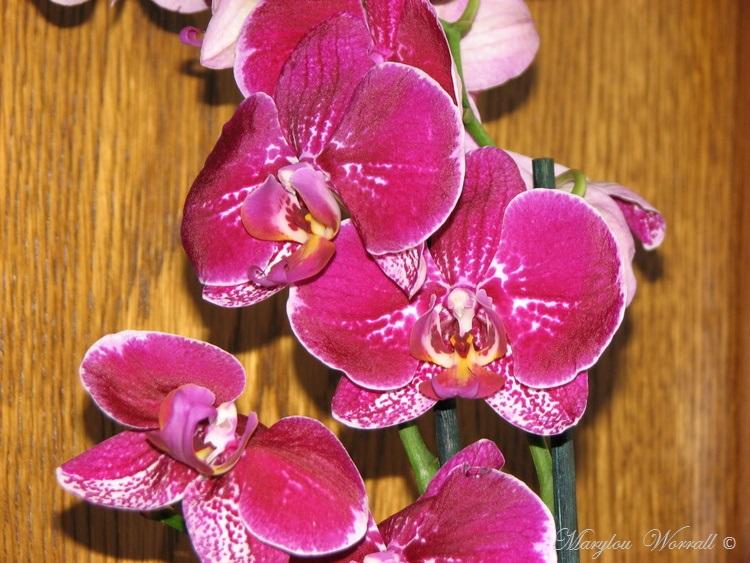 Troisième orchidée de l'année