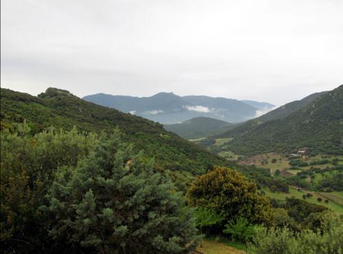 Corse du Sud - Arbellara