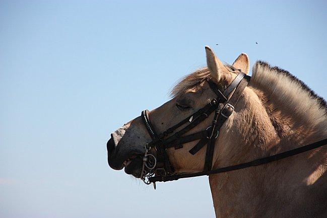 Porz-Bugale-82--32--cheval.jpg