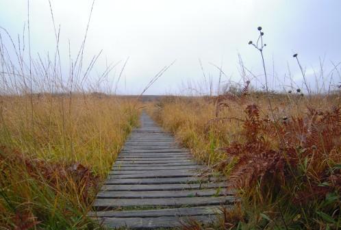chemin ds le marais