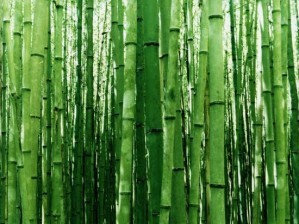 bambou-a.jpg