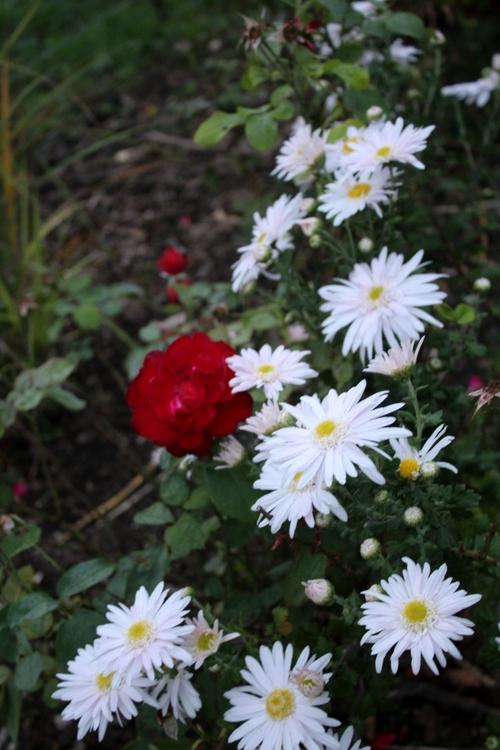 Les floraisons d'automne se poursuivent