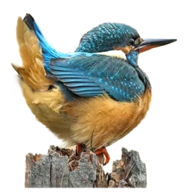 special  oiseaux