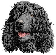 irish water spaniel head 3H 3sizes 1150