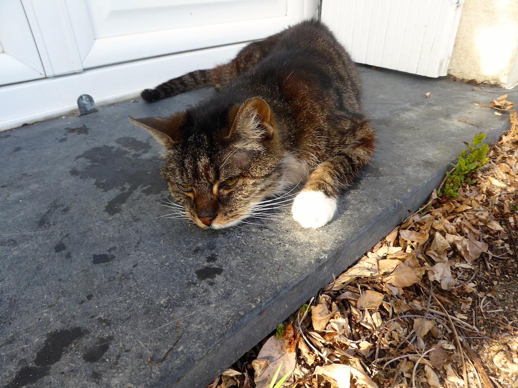 Adieu à notre chatte Cyann!