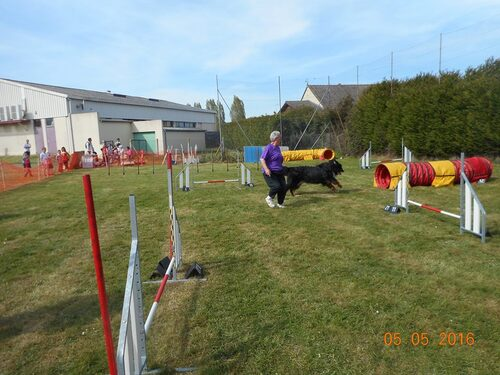 Irish en démonstration d'agility
