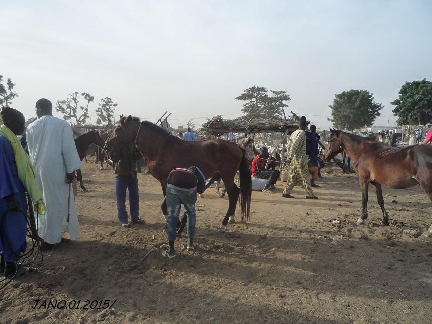 Quelques vues  du Sénégal....