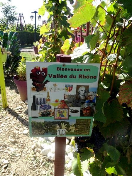 Le jardin de Bacchus à Massingy