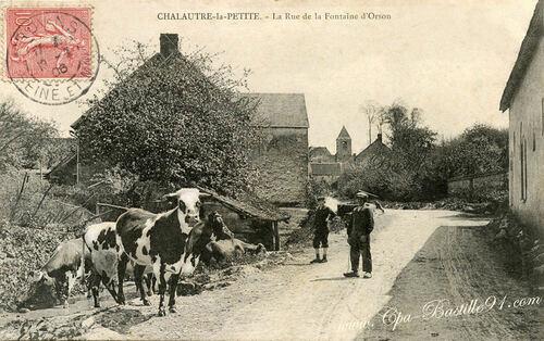 13 - Encore des cartes postales, avec des vaches