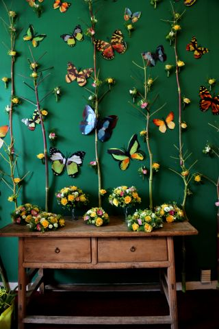 Beervelde Printemps 2017 - Des papillons plein les yeux (2/3)