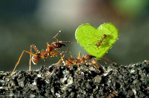 Les fourmis savent s'exprimer