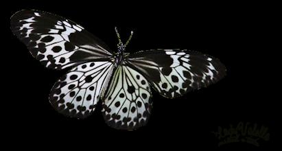 Tubes Farfalle