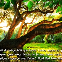 medecine_energetique_naturelle