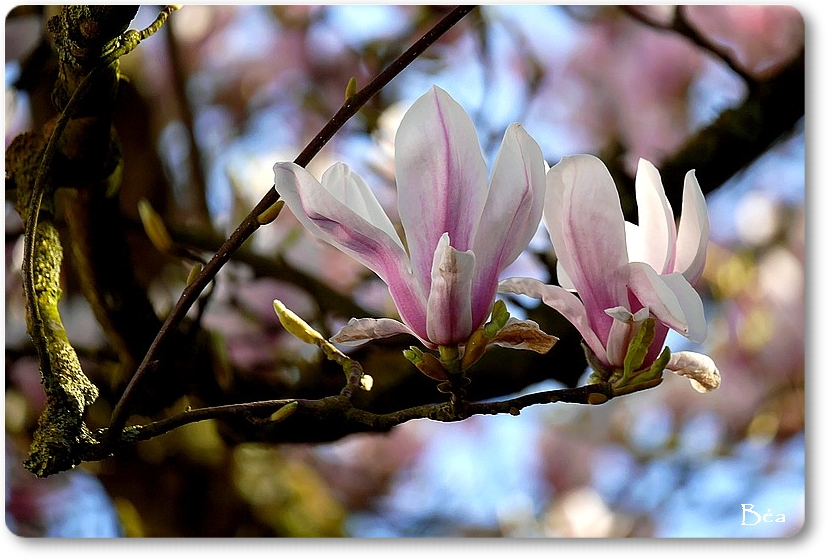 Flore d'avril