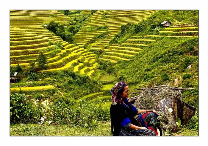 Une rizière par jour 19