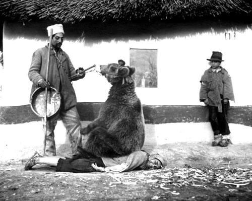 Utiliser un ours pour soigner le mal de dos. C'était en Roumanie, et ça se passait en 1946.