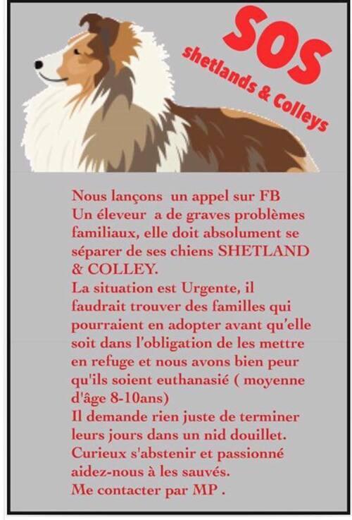 Elevage qui ferme, grosse urgence en Bourgogne /  Recherche familles d'accueils