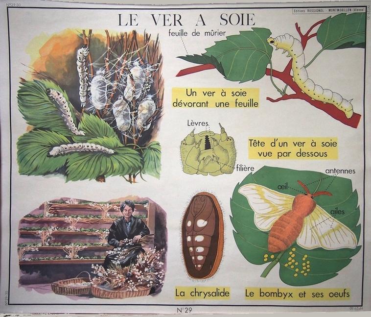 L'Écolier et le Ver à soie