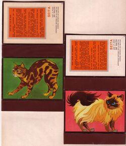 Série chats