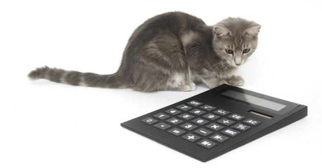 un chat avec une calculette