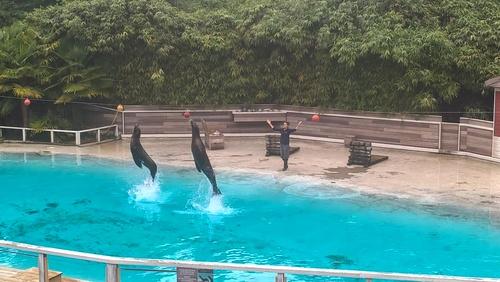 Zoo de la Flèche (3) : souvenirs