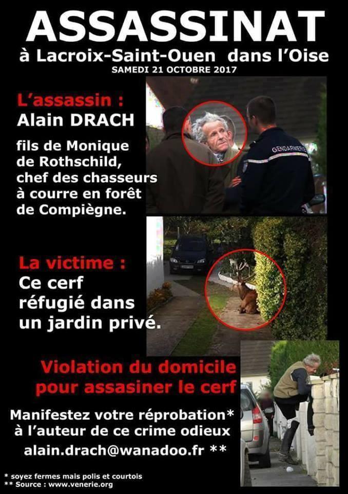 La haute noblesse d'un pauvre Cerf face à l'insigne vulgarité d'une piètre petite sous-merde riche nommée Alain Drach de Nadine de Rothschild par Patrick FRASELLE