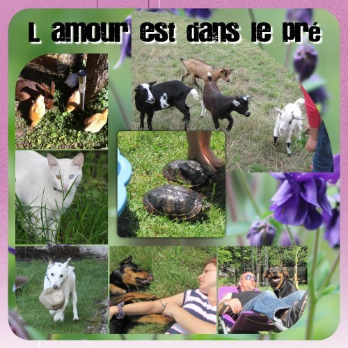 11.Nos animaux