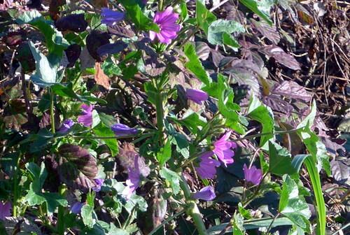Fleurs sauvages de février