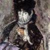 5 Berthe Morisot à la voilette pastel sur font bordeaux