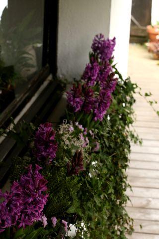 Jardinières de printemps