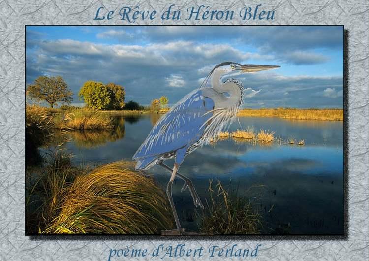 """"""" Le Rêve du Héron Bleu """"   poème d'Albert Ferland"""