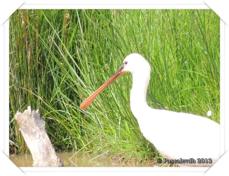 Symphonie printanière à la réserve ornithologique du Teich - 18/20