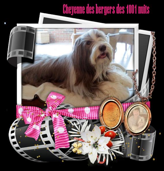 ♥ Cheyenne ♥ fête ses 11 ans