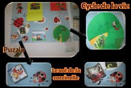 Lapbook : la coccinelle