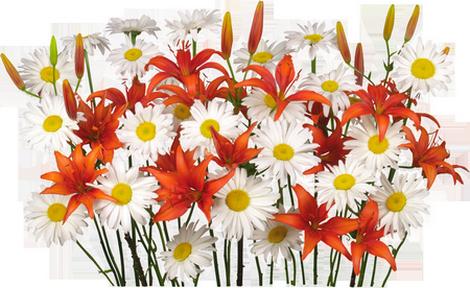 Bon Mardi XhUmOVEOro-IrGveH-F16eyyTsg