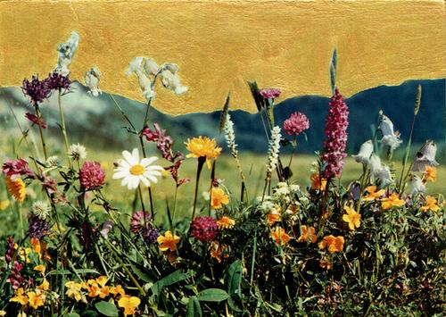 fleurs de montagne sur fond doré