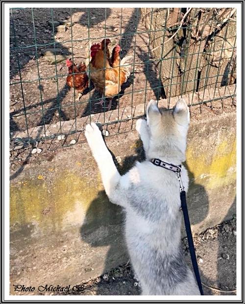 A la découvertes des autres animaux (24 février 2015)