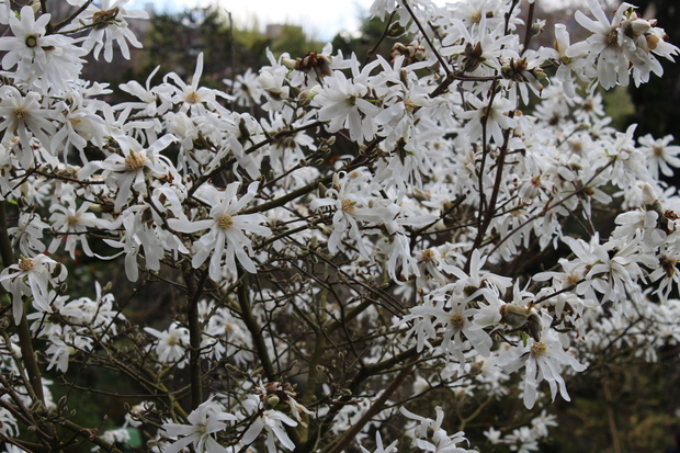 *Petite balade au Jardin Japonais