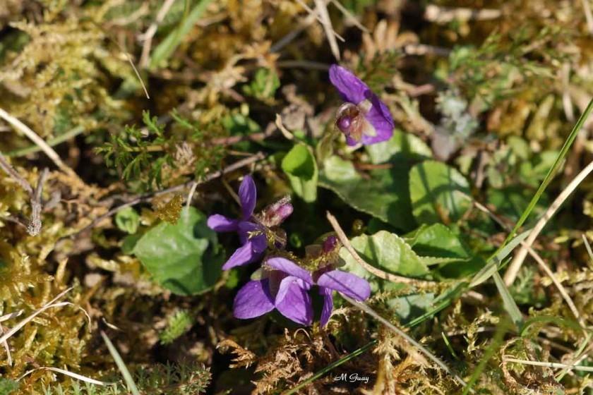 violettes-7516.jpg