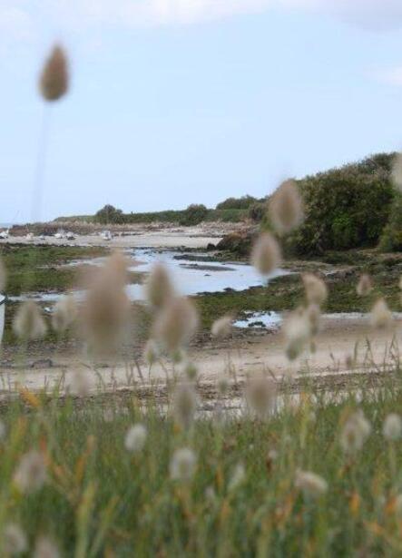 Plage de Kervaliou à Port Neuf 057