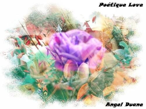 Sublime Paysages