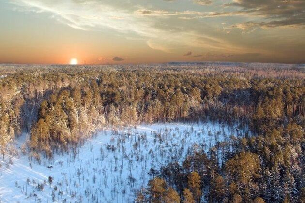 Taiga en Sibérie